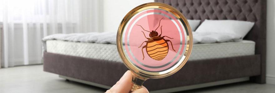 Trouver un exterminateur de punaises de lit